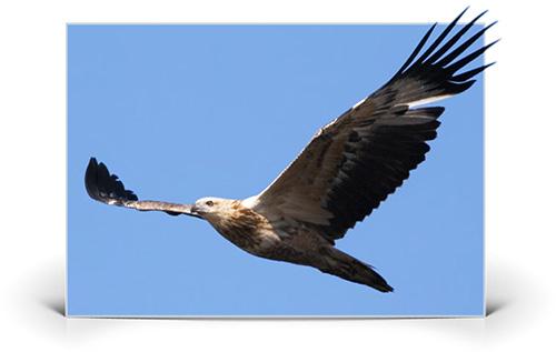 Binoclu Steiner birdwatching Discovery 8x42